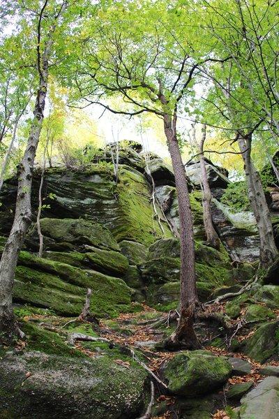 Trees, roots, rocks on ledges.