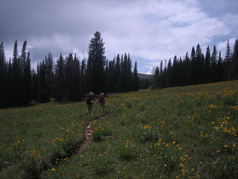 The Bacon Rind Creek Trail leaves Yellowstone and climbs through fields of wildflowers up the south side of Red Mountain.