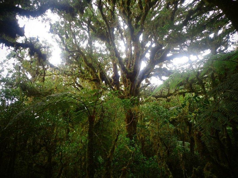 The green curtain of Mt. Kalatungan! ;)