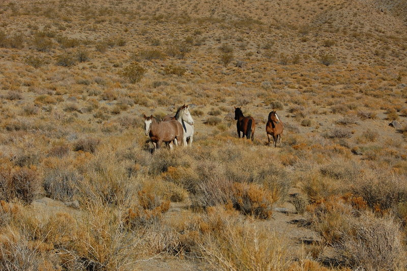 Wild horses join us in the wash between canyons.