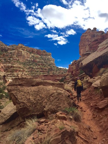 Shortly after the switchbacks - a peak at how the trail looks.