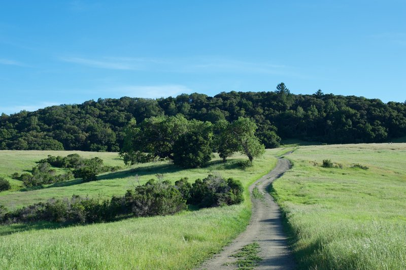 The trail meanders through the grasslands toward the Serpentine Trail.