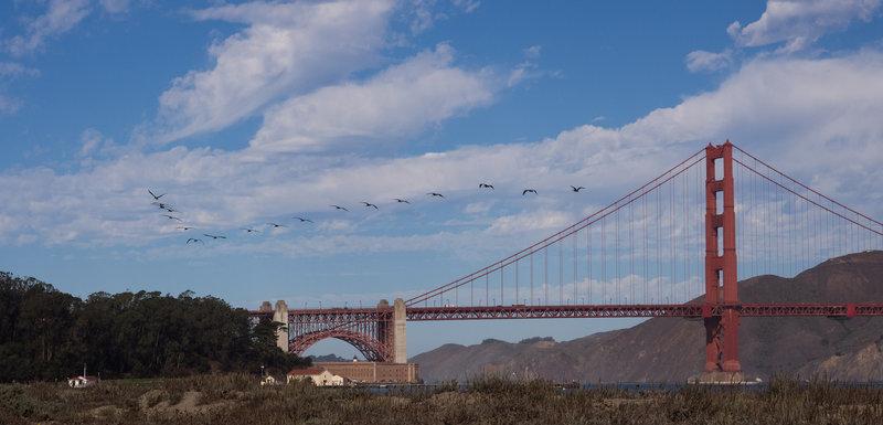Pelican V over the Golden Gate Bridge