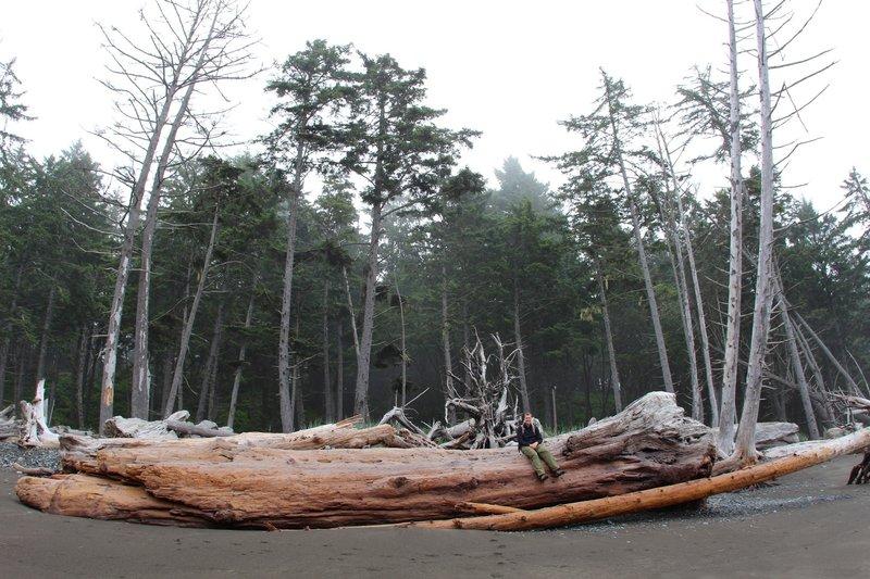 Sitting on large abandoned driftwood.