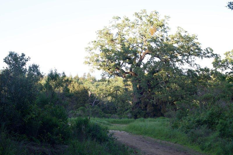 View toward the Spring Ridge Trail.