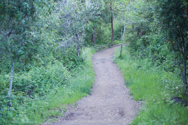 The trail winds its way through the woods.