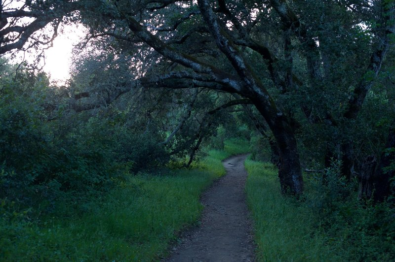 The trail begins to enter a corridor lined with trees.