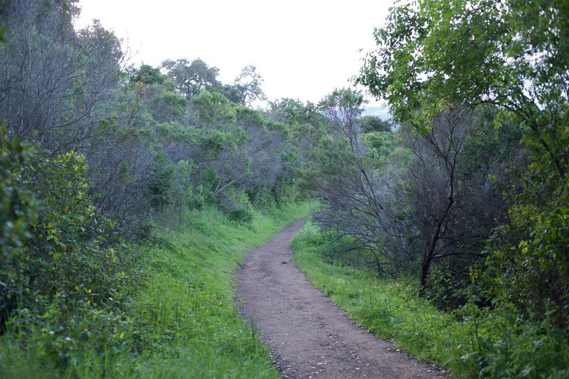 The trail as it runs along the hillside.