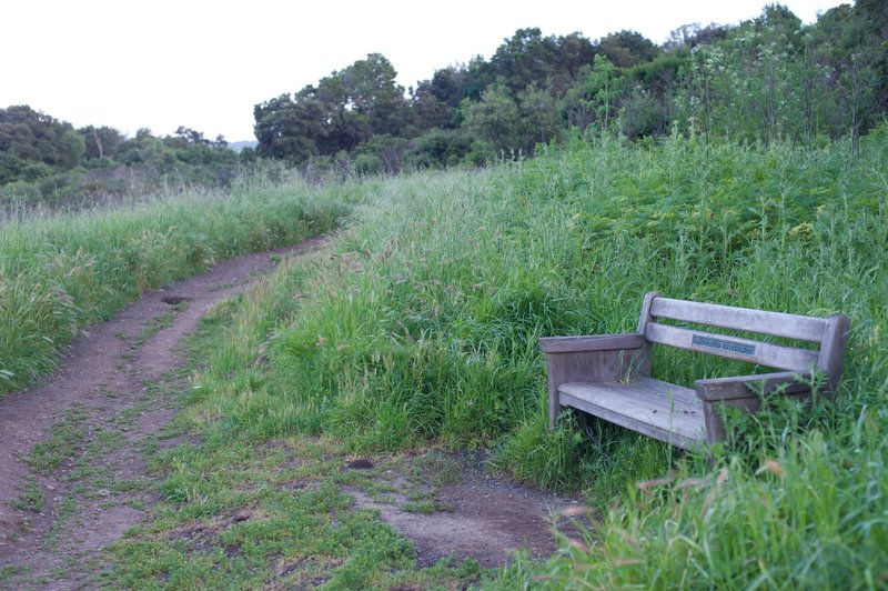 A bench sits beside the trail allowing you to enjoy the views.