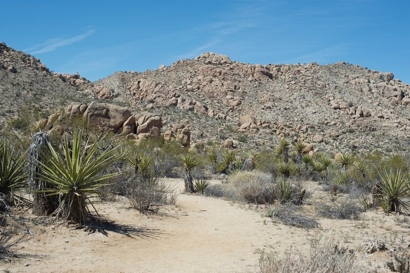 Cacti line the trail as it makes its way through the desert.