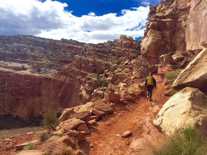 The trail skirting along the canyon rim on the way to Cassidy Arch.
