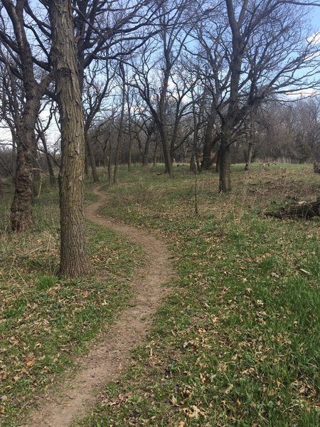 Great singletrack through at Whiterock Conservancy around the campground.