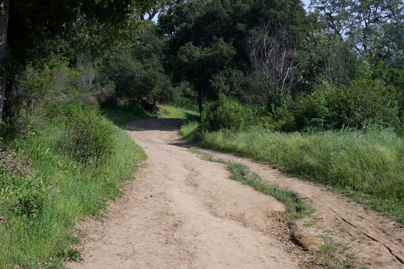 The trail rolls gently uphill. You can see erosion issues in the trail due to recent rains.