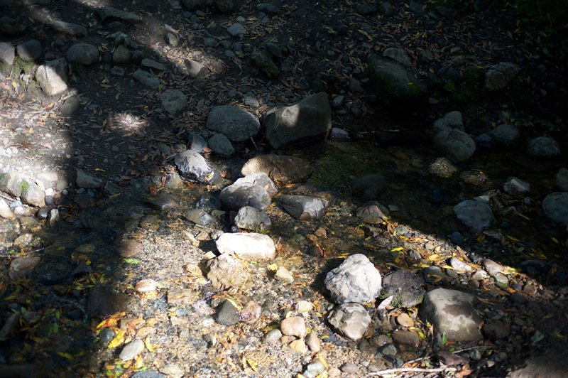 The creek crossing is easily overcome by rock hopping.