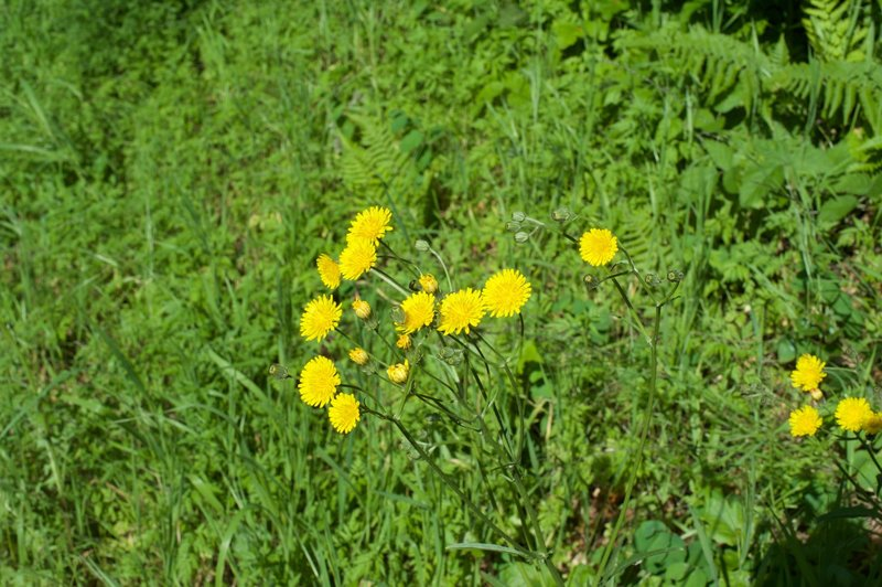 Flowers can be seen in small, open areas along the trail in the spring.