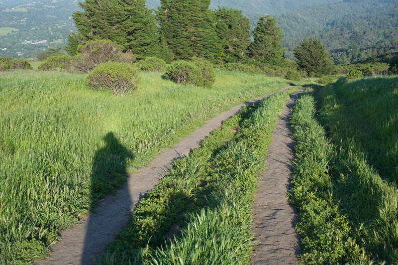 The Spring Ridge Trail as it drops from Skyline Boulevard back into the preserve.