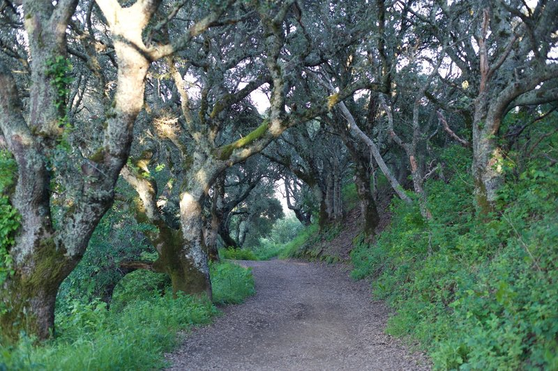 The trail enters a shaded grove of trees, a nice break from the sun.