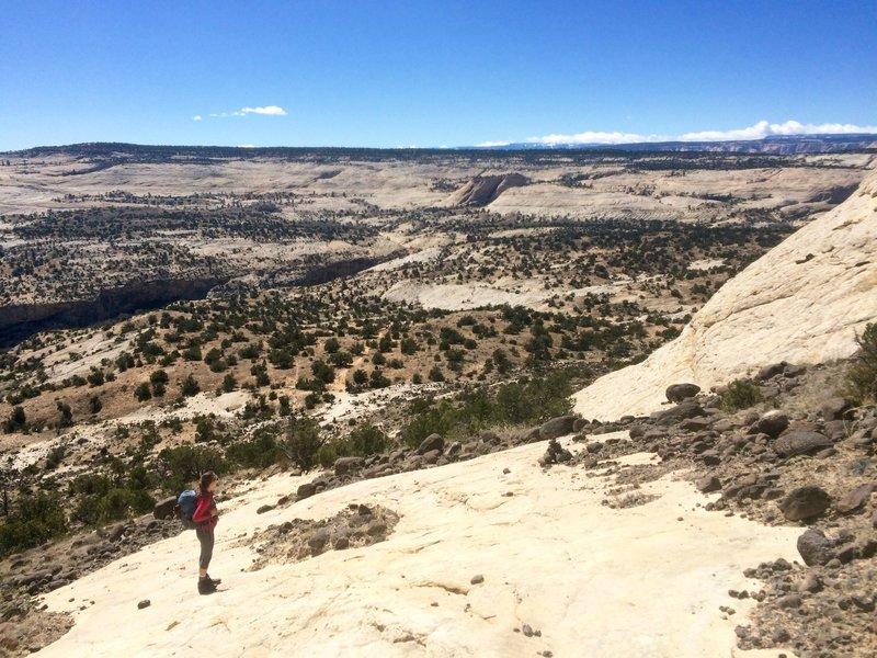View down into Calf Creek Canyon.