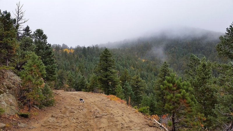 Fog on the hillside along Switzerland Trail.