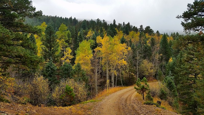 The aspens starting to change along Switzerland Trail.