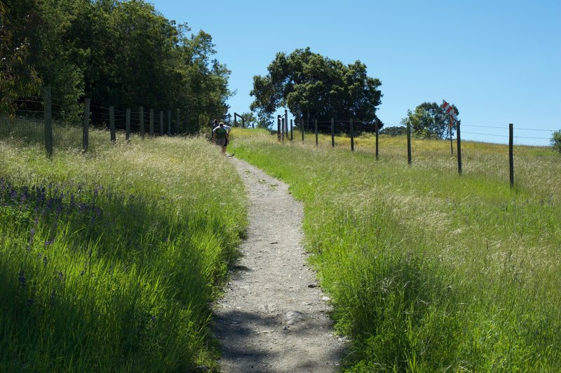 The trail climbs away from Edgewood Road as it follows the interstate for a short distance.