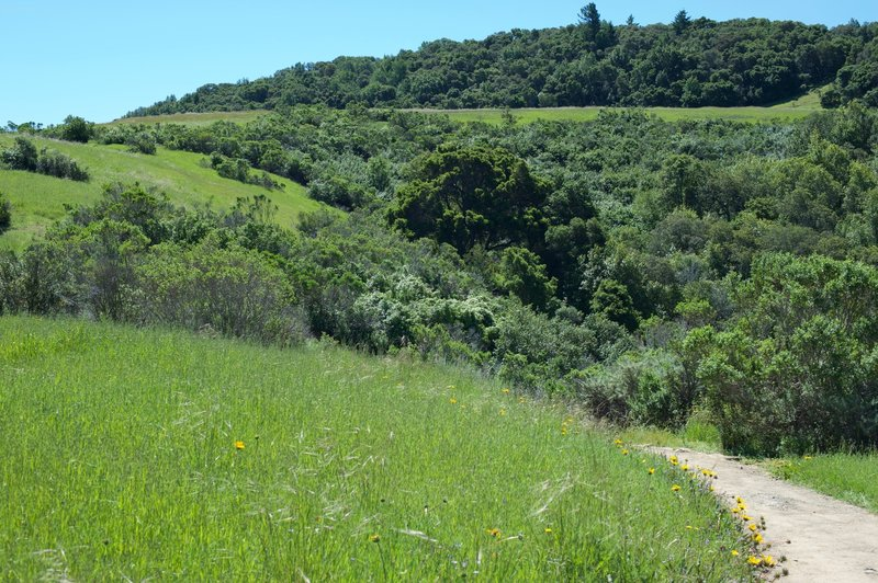 The trail as it hugs the hillsides.  Wildflowers bloom in the open spaces beside the trail.