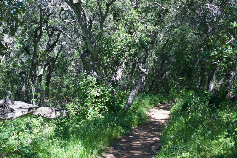 The trail enters the woods and the shade is welcome.
