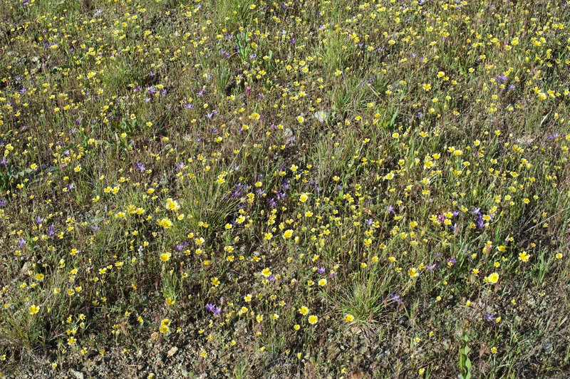 Several varieties of wildflowers can be seen in the spring alongside the trail.