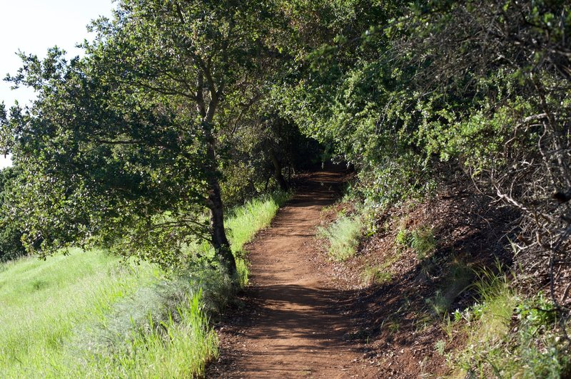 The Franciscan Trail ascends into the woods from its junction with the Ridgeview Trail.