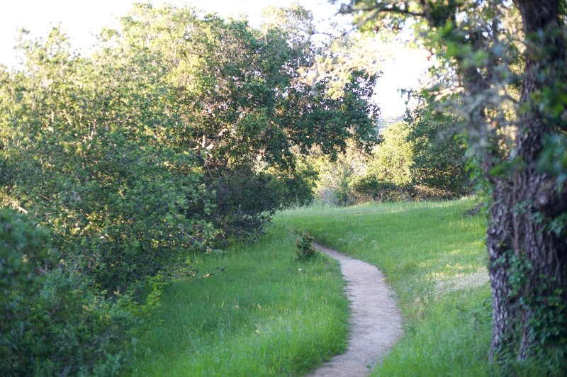 The trail narrows after it passes the Old Stage Road and approaches the Edgewood Trail.