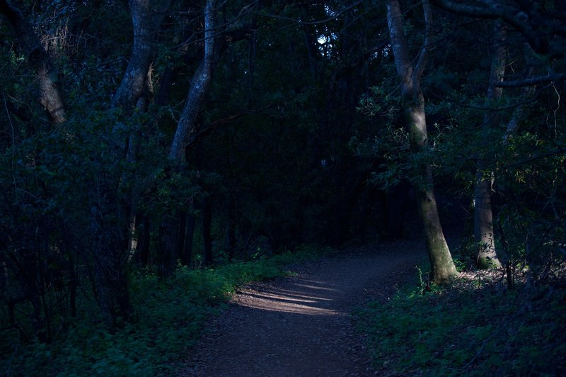 The trail enters the woods and the shade of the trees.