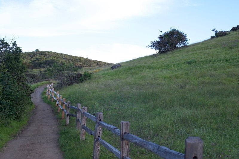 The trail breaks to the right and climbs the hillside.