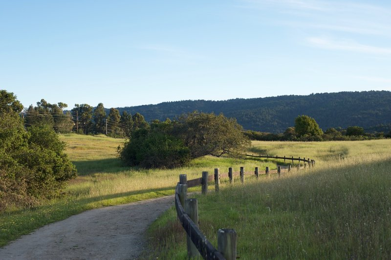 The trail levels out as it approaches the Sunset Trail.   Animals feed alongside the trail in the evening.