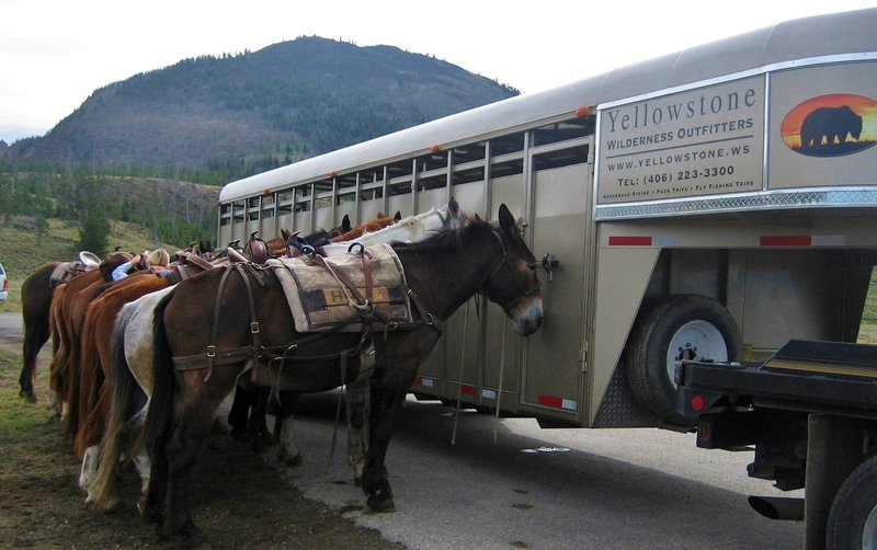 Yellowstone Wilderness Outfitters ready the horses for a pack-trip starting from the Glen Creek Trailhead.
