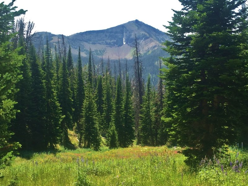 Flower-filled meadow with views of Top Notch Peak.