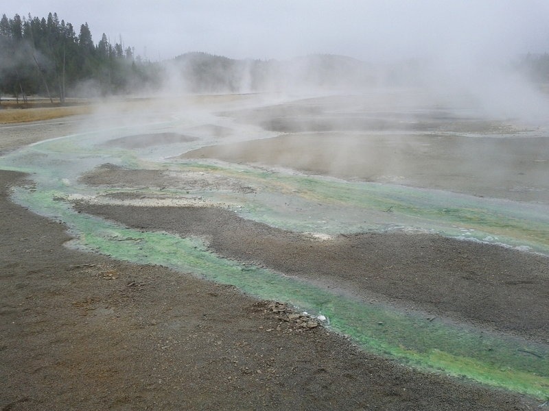 Overlooking some of the unique features in the Norris Geyser Basin.