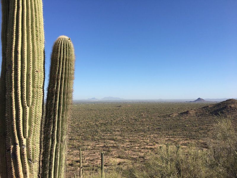 Looking out over the fragile Sonoran Desert. Picacho Peak is in the distance.