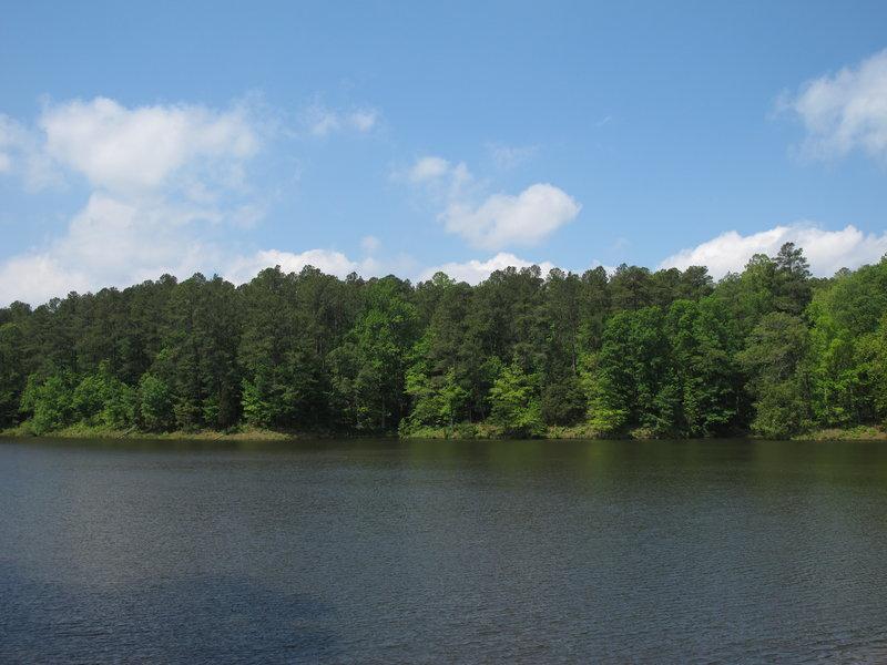 Reedy Creek Lake