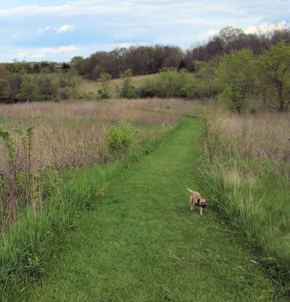 Woods give way to grassland