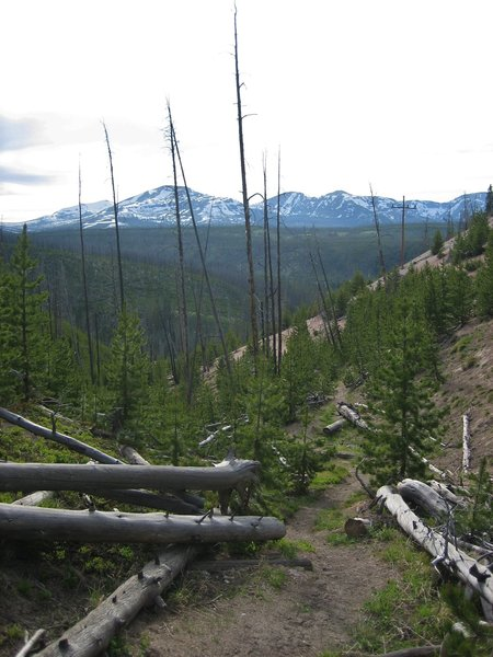 The Solfatara Creek Trail drops steeply to its northern trailhead. The 1988 forest fires cleared the trees in the area providing views of the Gallatin Range to the northwest.