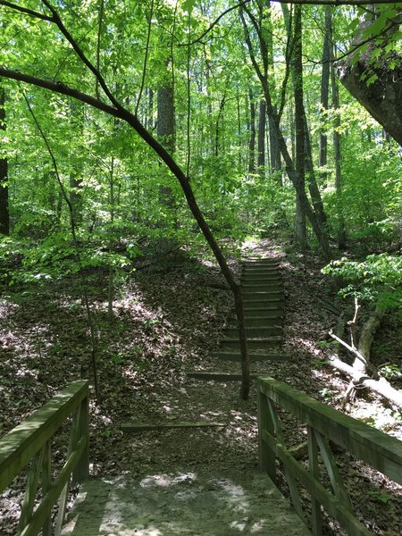 Over foot bridges and wooden steps among the spring green leaves.