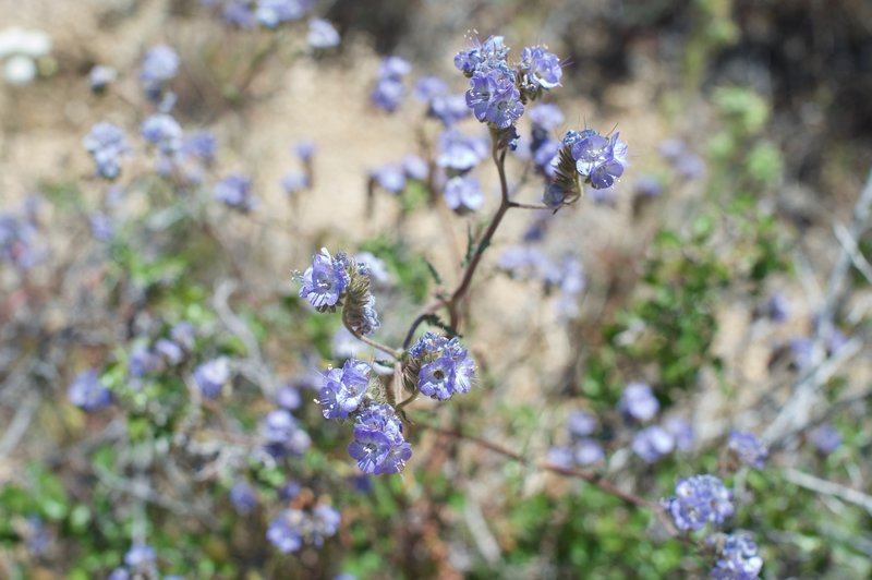 There are a wide variety of flowers along the trail, offering a variety of colors in the desert.