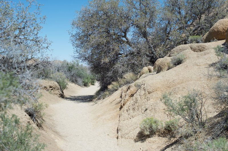 The trail narrows slightly as it approaches Skull Rock.