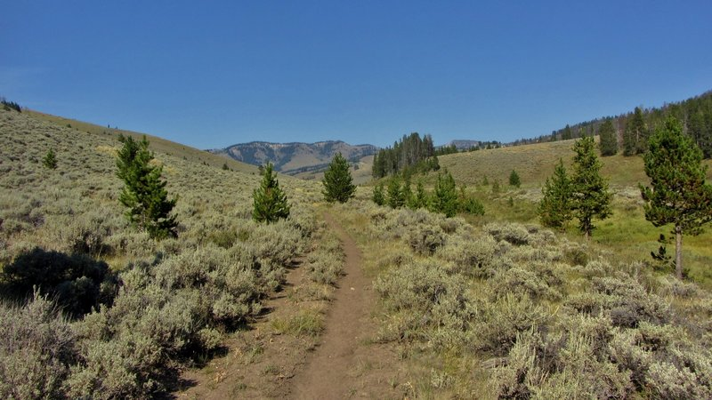 Looking up the Dailey Creek drainage from near the trailhead.