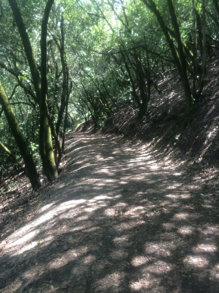 Very beginning of the trail; nice and shaded.