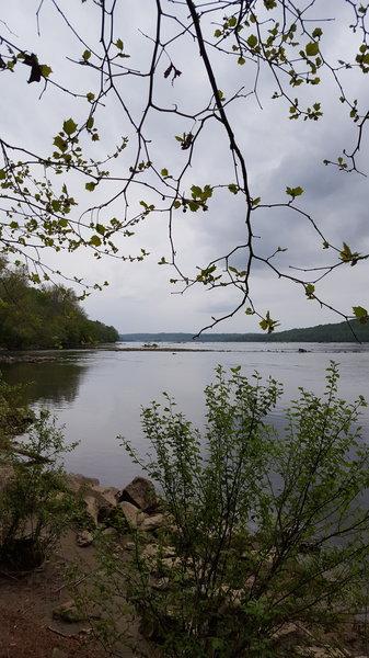 Looking north from the Susquehanna River towards Conewingo Dam.