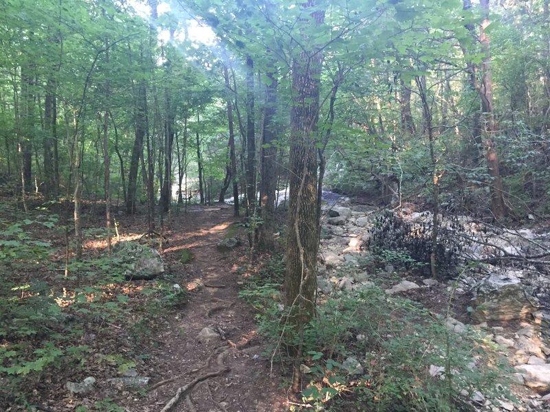 Fagan Spring Trail runs next to Fagan Creek.