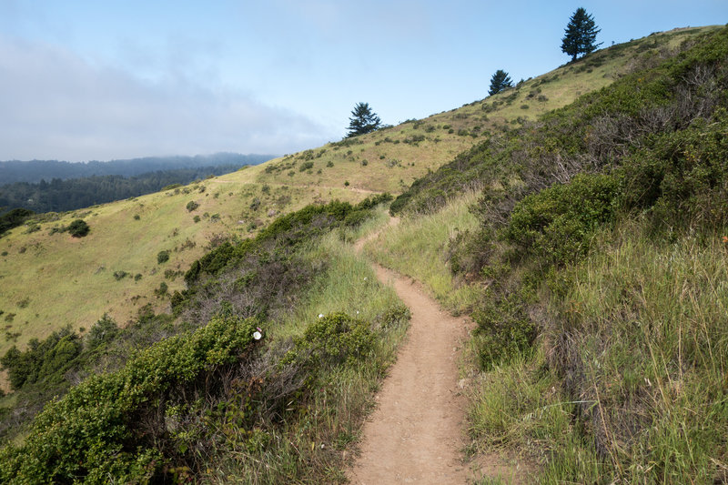Heading around the bend on the Redwood Trail.