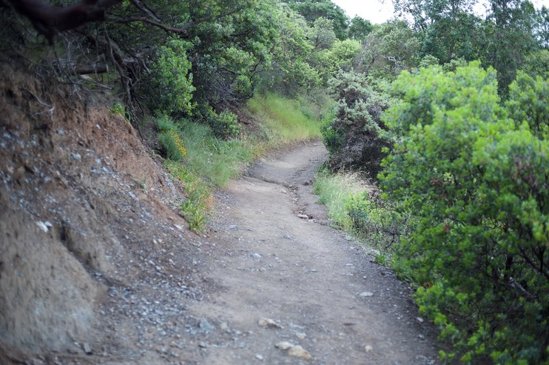 The trail slopes downhill as it makes its way uphill.