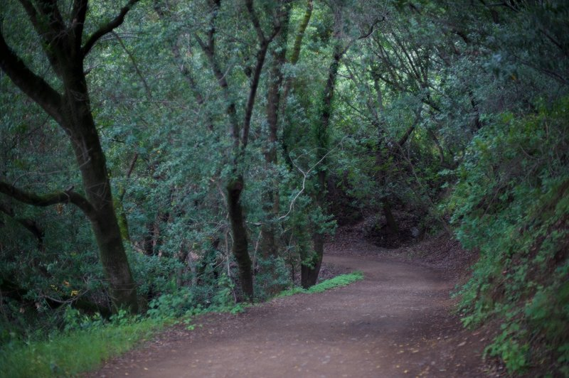 The trail as it enters into the woods.
